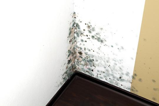 Causas del moho y cómo combatirlo. 6
